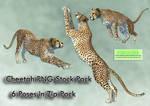 Cheetah PNG Stock Pack