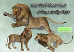 Lion PNG Stock Pack
