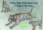 White Tiger PNG Stock Pack