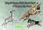 Dog And Puppy PNG Stock Pack