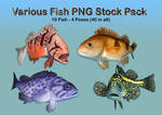 Various Fish PNG Stock Pack