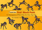 Foal PNG Stock Pack