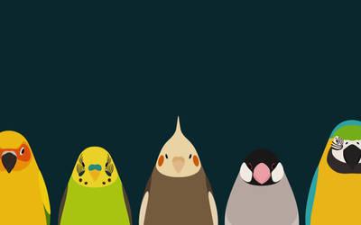 Five Birds - tori no iro by birnimal