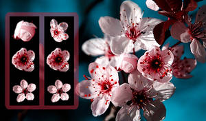 Sakura Start Orbs