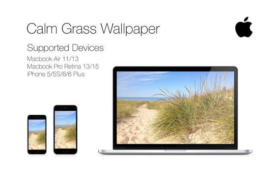 Calm Grass Wallpaper