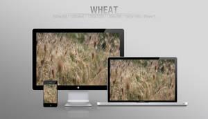 Wheat [WALLPAPER]