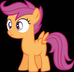 ScootaWhat?!