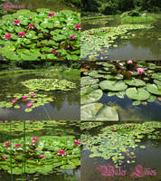 Water Lilies pack by Comacold-stock