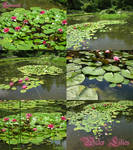 Water Lilies pack