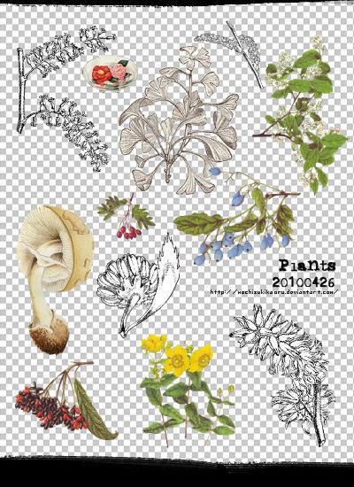 [mochizuki's] png plants 20110426 by mochizukikaoru