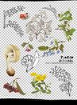 [mochizuki's] png plants 20110426
