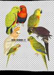 [mochizuki's] png  birds2