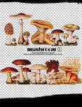 mochizuki's psd mushroom2