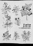 [mochizuki's] 20120322 plants png