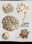 [mochizuki's] flowers 2012 1