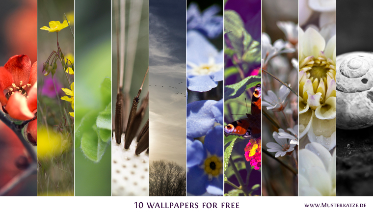 10 Wallpapers for free by Musterkatze