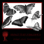 Twisted Mind Butterfly Brushes Vol 1