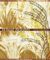 Wheat Brushes