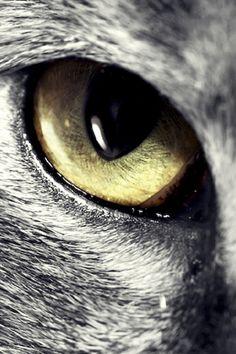 Beautiful| Loki x Werewolf!Reader by ClanWarrior on DeviantArt