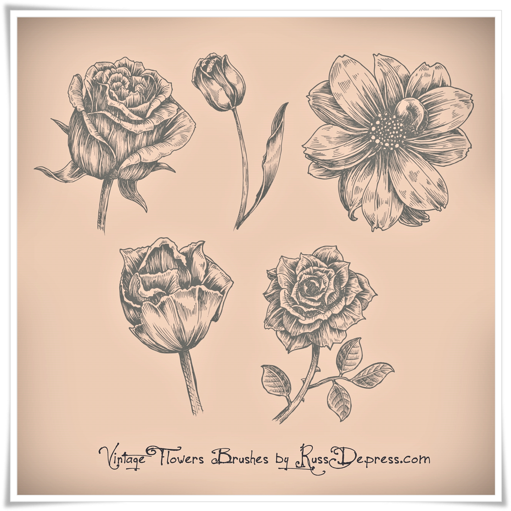 Vintage Flowers High Res Photoshop Brushes