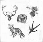6 Vintage Animals High Res PS brushes