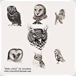 Boho Owls PS brushes