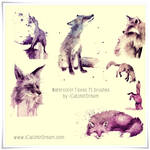 Watercolor Foxes High Res. PS Brushes