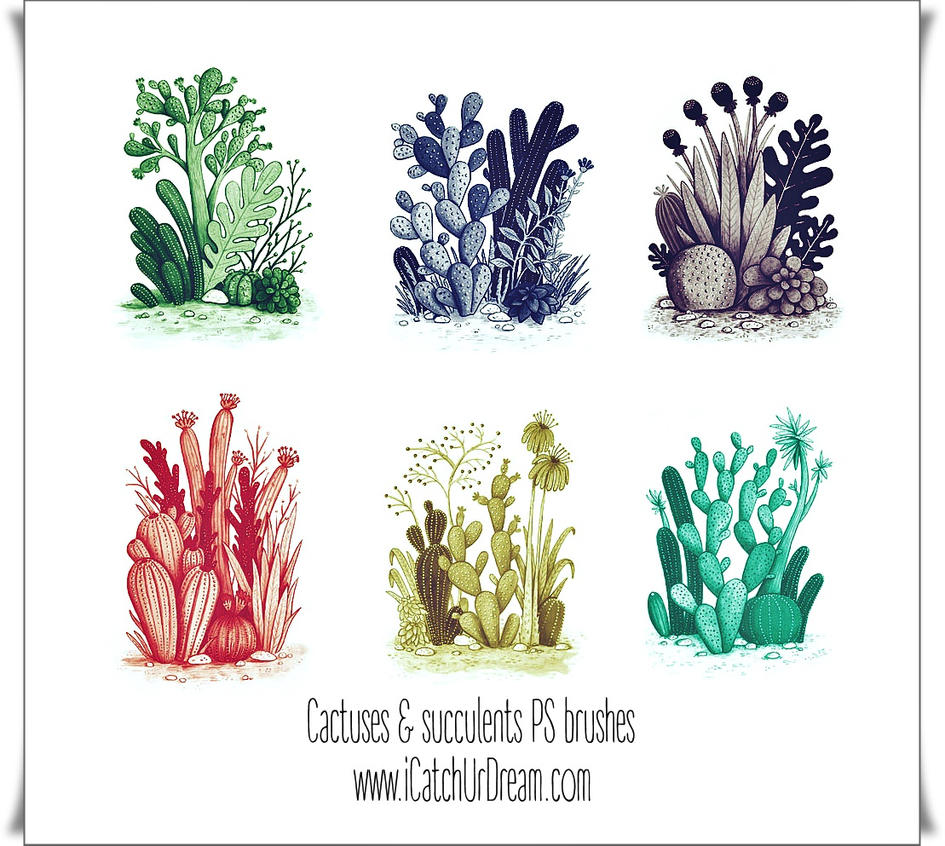 Cactuses And Succulents PS brushes by iCatchUrDream