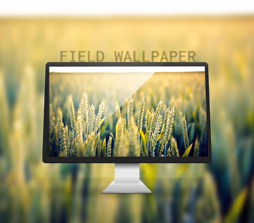Field Wallpaper (4k) by rudolfzz111