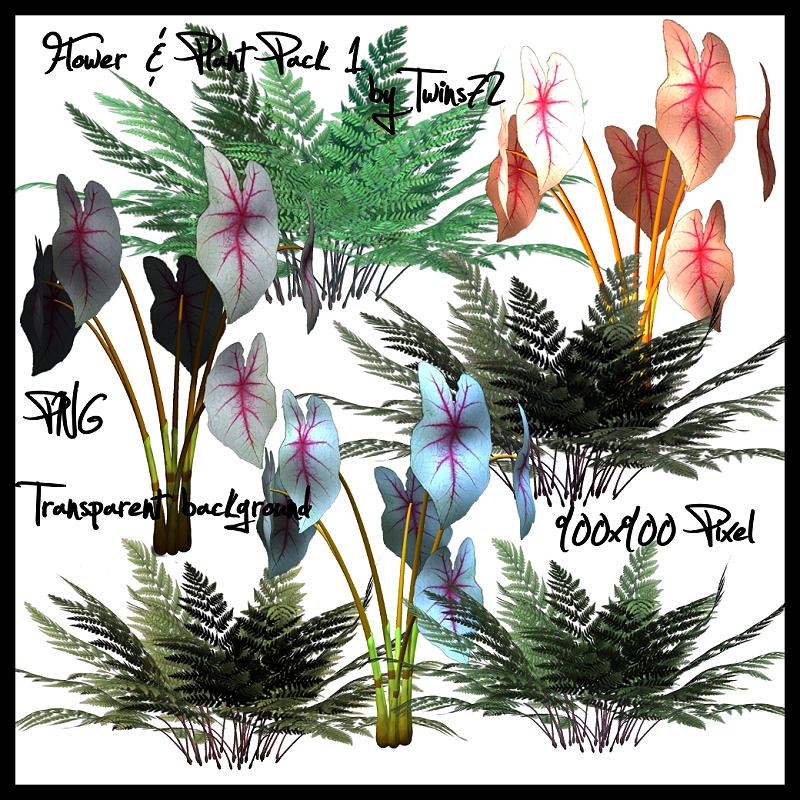 Flowering Plant Stock Flower Plant Pack 1 by