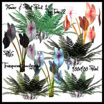 Stock Flower Plant Pack 1