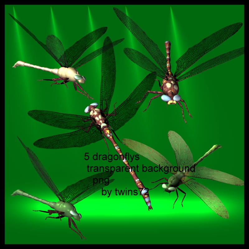 stock png dragonfly by Twins72