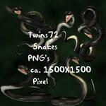 Stock Black Snakes