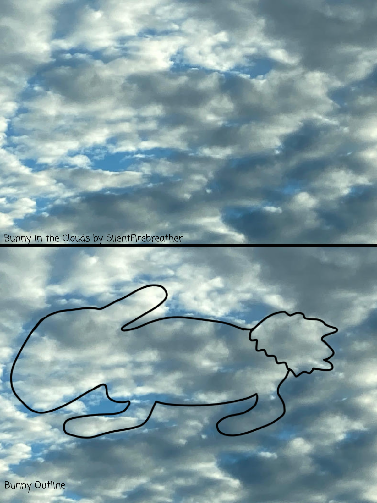 Bunny in the Clouds (Contest Entry)