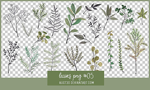 Leaves PNG #5