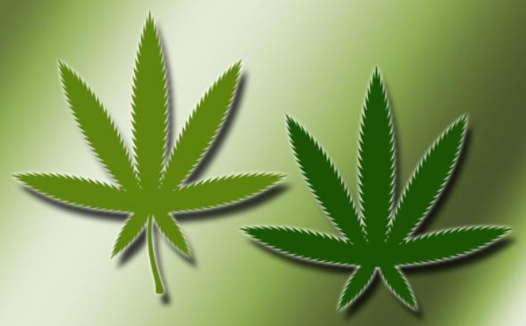 Marijuana Leaf Brush by enoctis