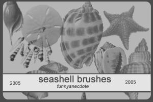Seashell Brushes - 2005
