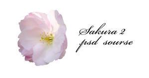 Sakura 2 psd