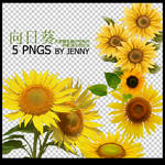 sunflower PNGS