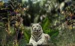 Tiger Tiger by Frankief