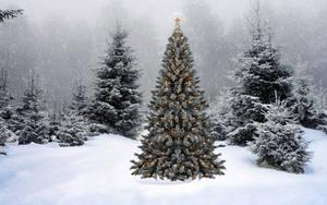 Lone Christmas Tree by Frankief