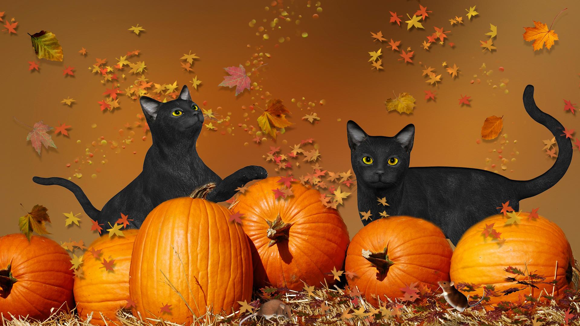 Simple Wallpaper Halloween Kitten - halloween_black_cats_by_frankief-d4e2pbs  Best Photo Reference_223488.jpg