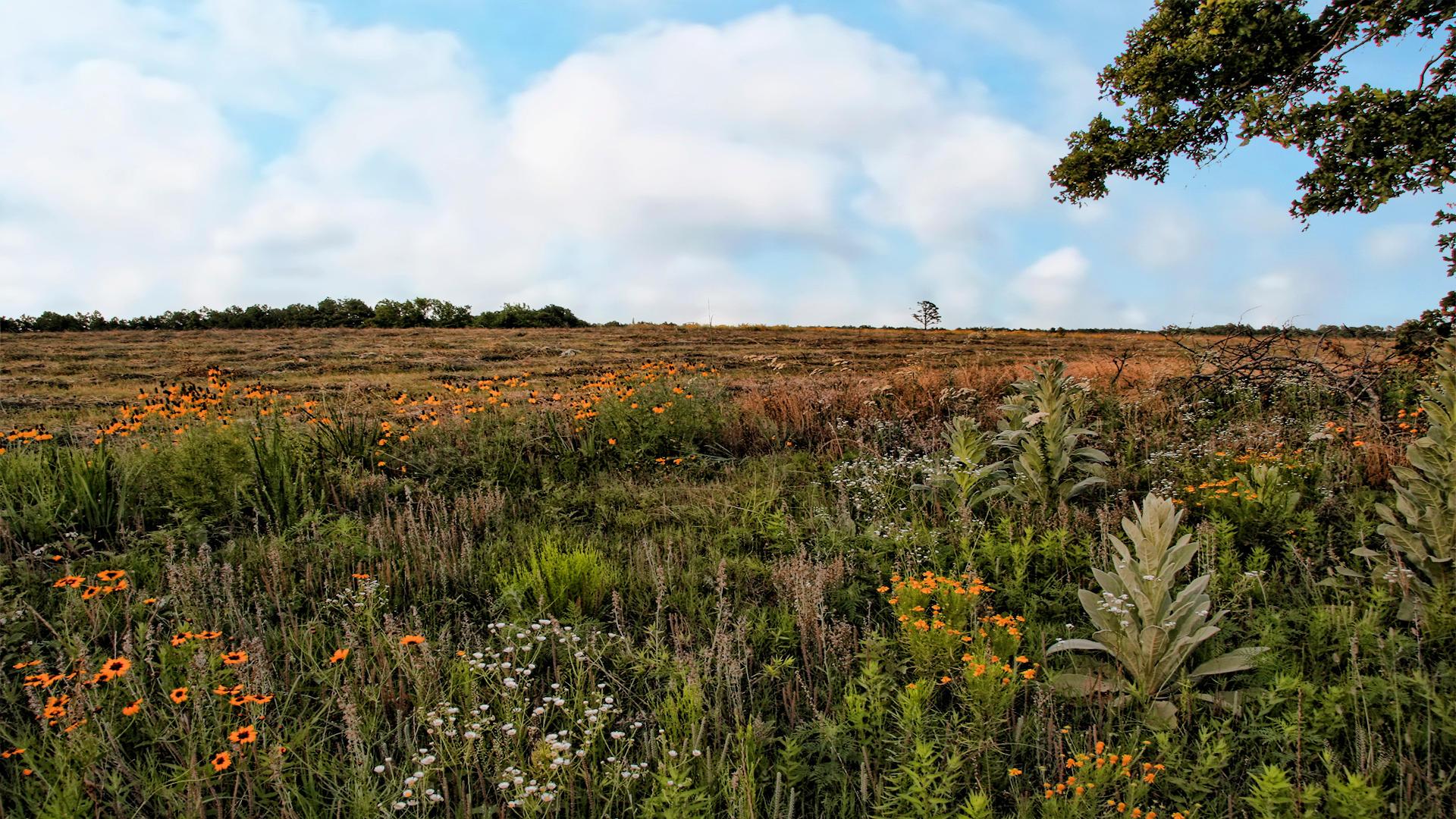 Field Flowers by Frankief