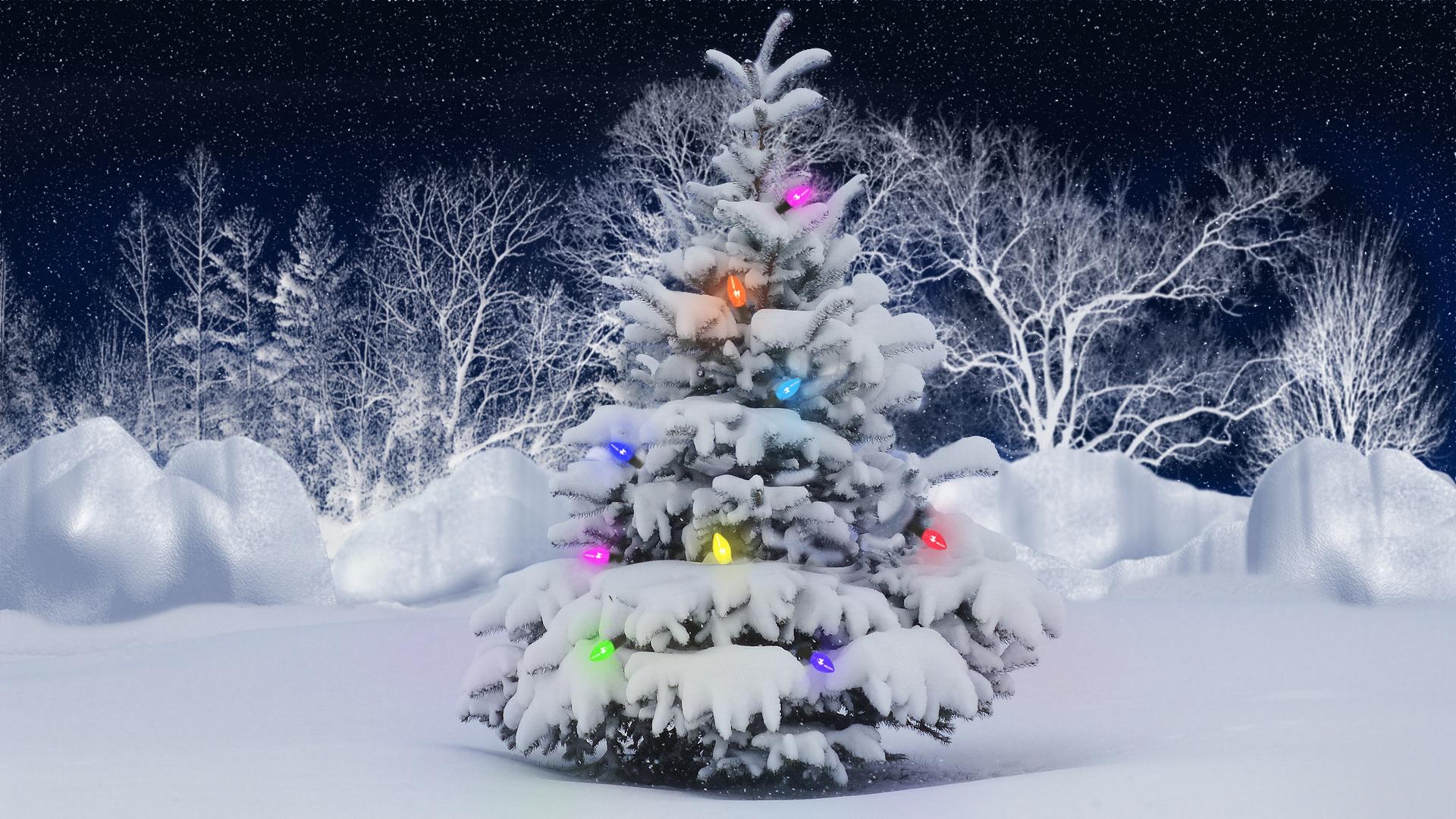 O Christmas Tree by Frankief