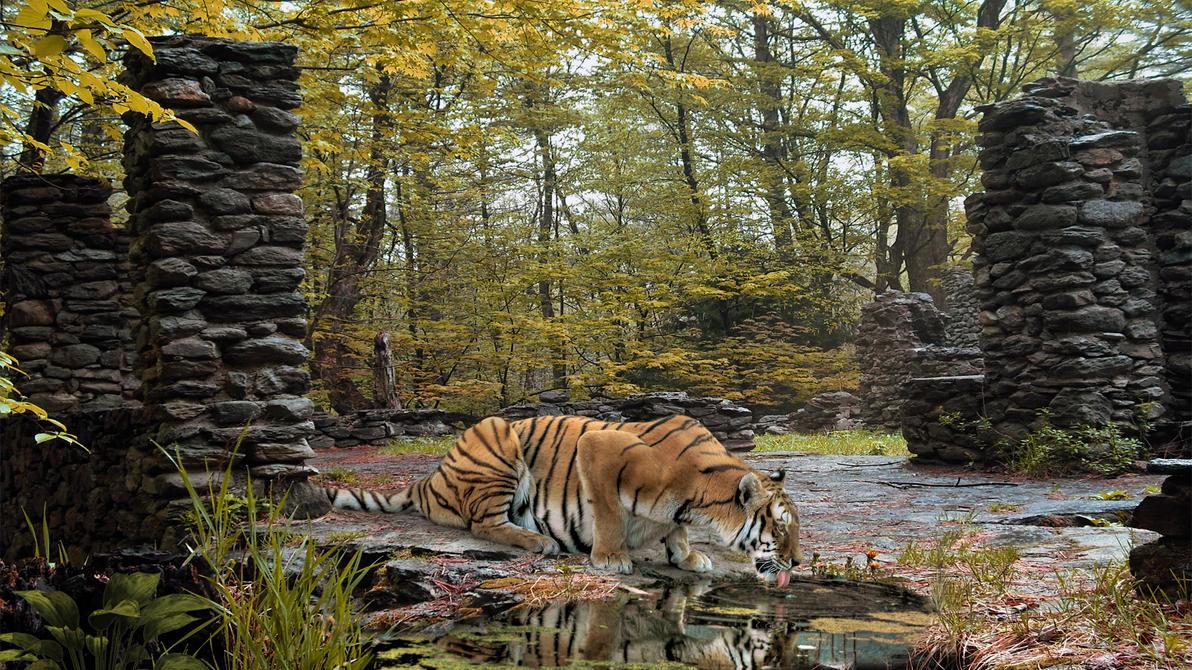 Tiger Lick by Frankief