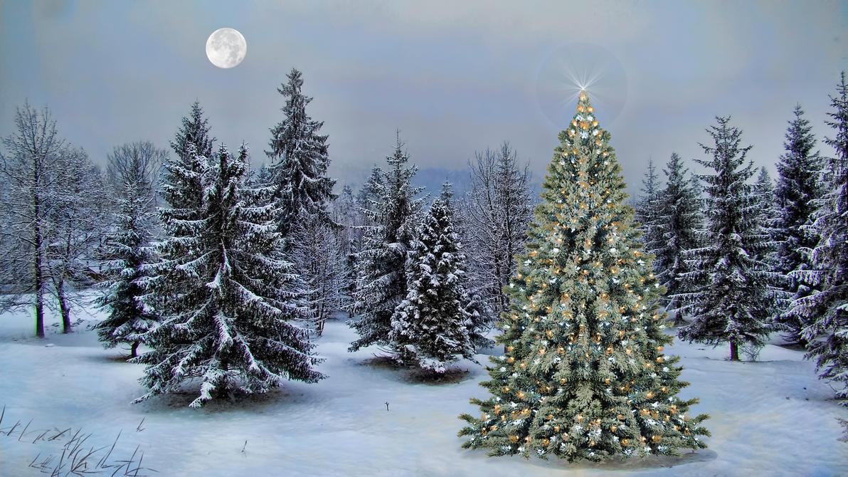 Christmas Tree 2013 by Frankief