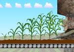 We are Corn