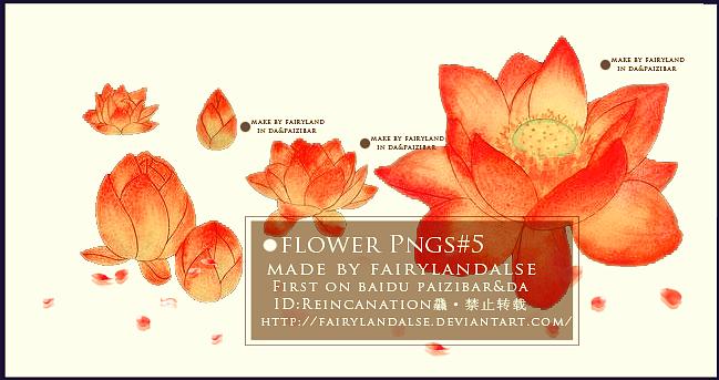 FLOWER PNGS #N by Fairylandalse