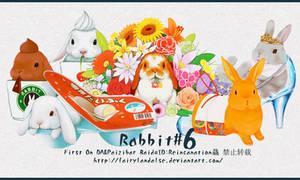 rabbit pngs