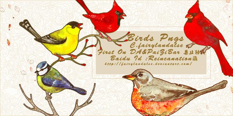Bird Png by Fairylandalse